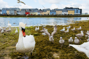 7 Things to do in Galway