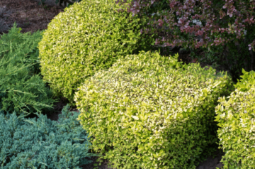 BEST LANDSCAPING AND GARDEN DESIGN SERVICES IN GALWAY