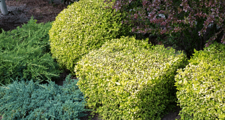 BEST LANDSCAPING AND GARDEN DESIGN SERVICES IN GALWAY ...